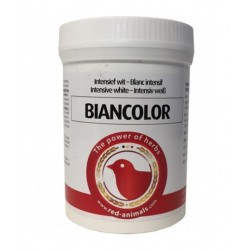 Biancolor Red Pigeon