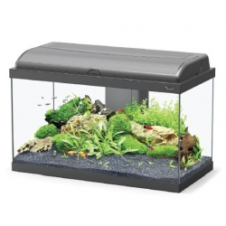 Aquariums AQUADREAM 60