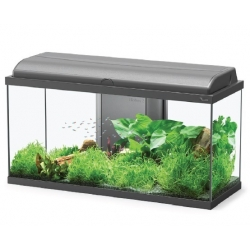 Aquariums AQUADREAM 80