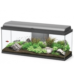Aquariums AQUADREAM 100