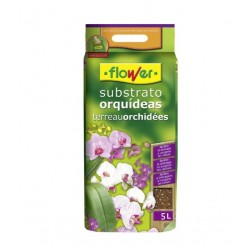 Orchid Substrate Flower