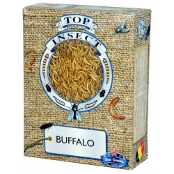Buffalo Top Insect