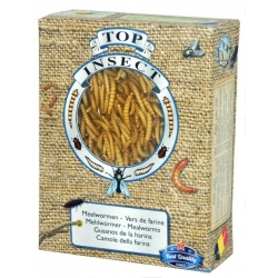 Mealworms Top Insect