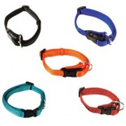 Collars and harnesses dog